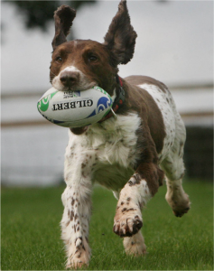 chien rugby - fondationuncoeur