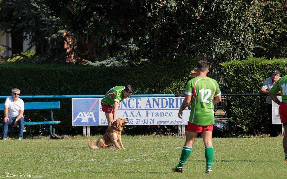 brennus chien (1)