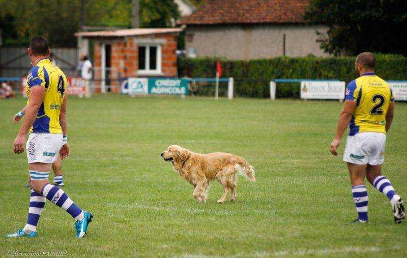 brennus chien (5)