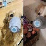 masque pour les chiens fb 5e33f34dc6abc